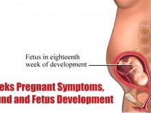 18 Weeks Pregnant Symptoms, Ultrasound and Fetus Development