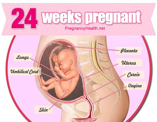 24 Weeks Pregnant Symptoms Ultrasound And Fetus Development